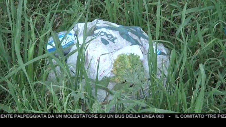 Canale News 10 01/02/2020 seconda edizione