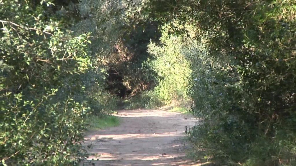 """Campidoglio: """"Il verde pubblico di Roma ora è censito e mappato"""" 4"""