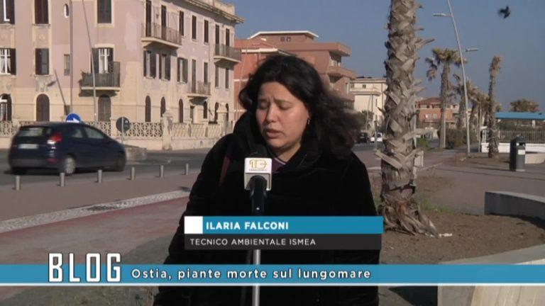 Ostia piante morte sul lungomare