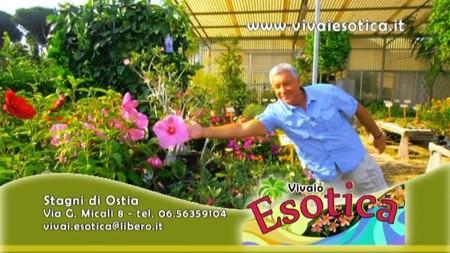 Vivaio Esotica