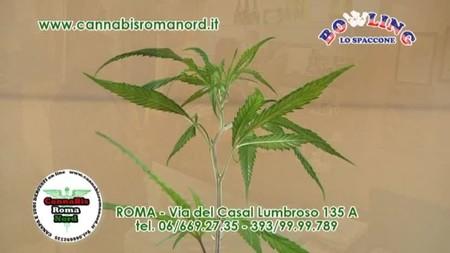 Cannabis Roma Nord