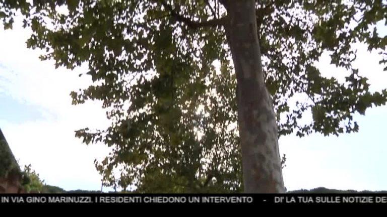 Canale 10 News 07/11/2019 seconda edizione