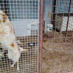 Cuccioli senza microchip: operazione delle Guardie Ecozoofile tra Ladispoli e Cerveteri 1