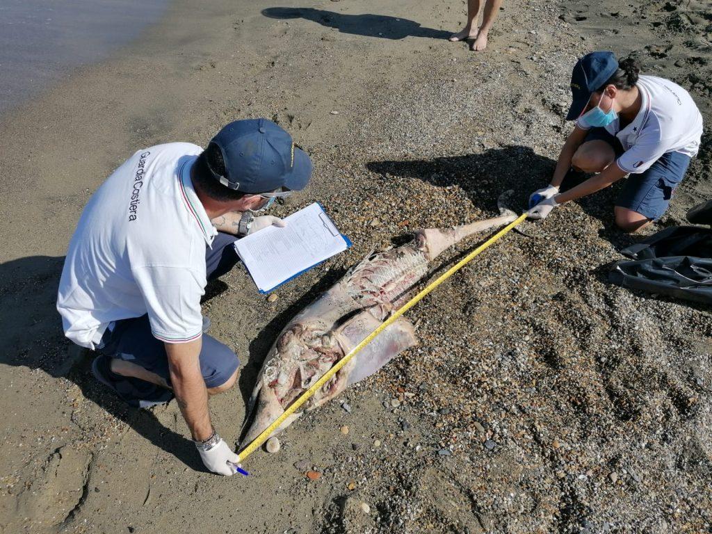 Focene: due delfini trovati morti sulla spiaggia 1