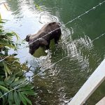 Elefantessa morta in India: domani sit-in a Roma 1