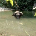 Elefantessa morta in India: domani sit-in a Roma 2