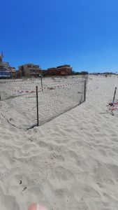 Torvaianica: tartaruga marina depone 90 uova sulla spiaggia 2