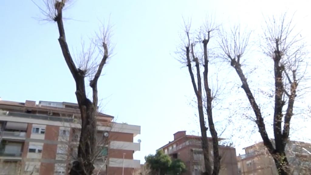 Strano fenomeno ad Ostia: alberi improvvisamente neri in Via Ammiraglio del Bono 1