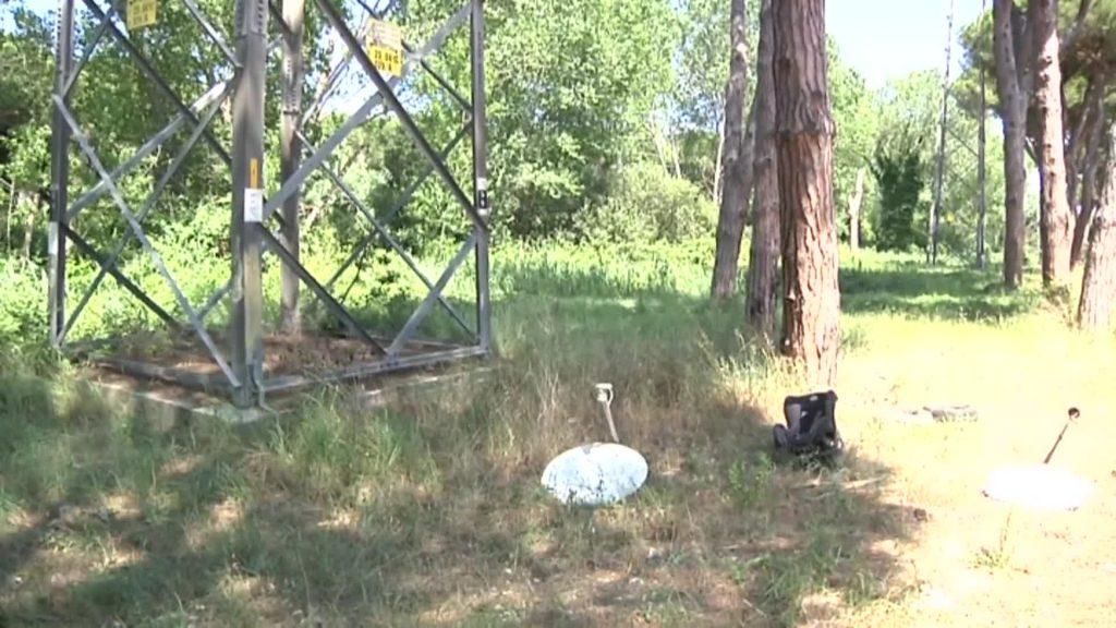 Ostia: carcasse di animali gettate in Pineta. L'associazione Doggy Dog lancia l'allarme 1