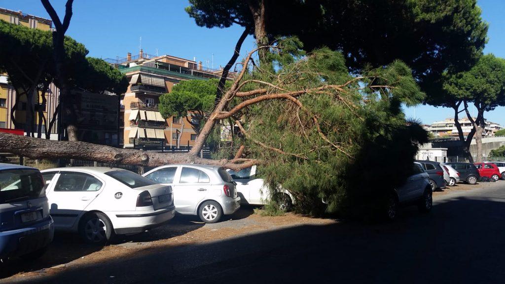 Ostia: un pino è caduto in via delle Antille. Danneggiate le auto in sosta 1