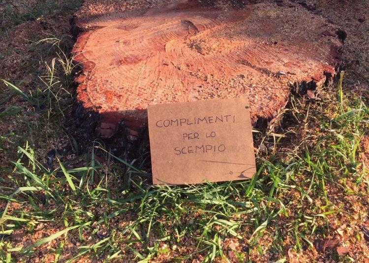 Axa: abbattimento pini in via Tespi. I residenti chiedono spiegazioni 1
