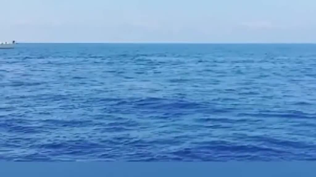 Delfini Ostia