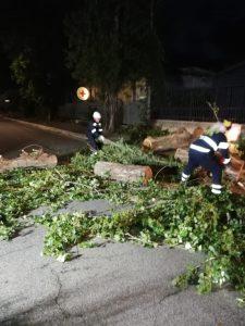 Fiumicino, strage di alberi per il vento. Cade pioppo alto 20 metri 1