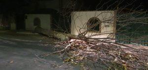 Fiumicino, strage di alberi per il vento. Cade pioppo alto 20 metri 2