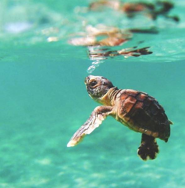 Tracciabilità delle rotte delle tartarughe marine 1