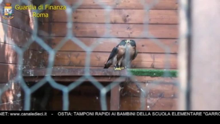 Canale 10 News 06/10/2020