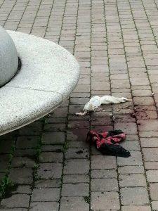 Tentato omicidio alla Cecchignola: 31enne è grave 2