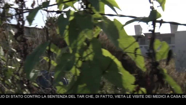 Canale 10 News 18/11/2020 seconda edizione