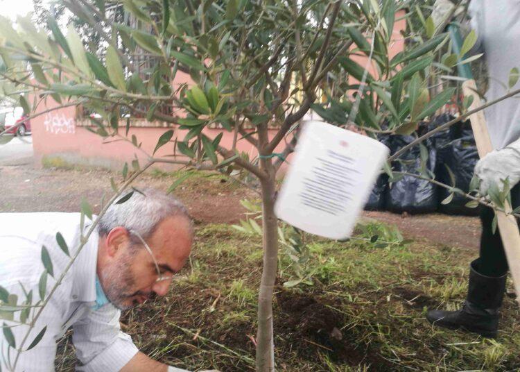guerrilla gardeners