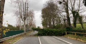 Tromba d'aria e alberi caduti a Roma e sul litorale: cronache del maltempo (VIDEO) 1