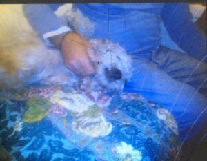 Lucky, è mistero sul cane smarrito a Ostia 1