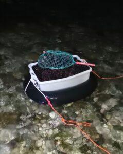 100 chili di ricci di mare sequestrati dalla Guardia di Finanza a Santa Marinella 1