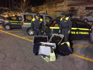 100 chili di ricci di mare sequestrati dalla Guardia di Finanza a Santa Marinella 3