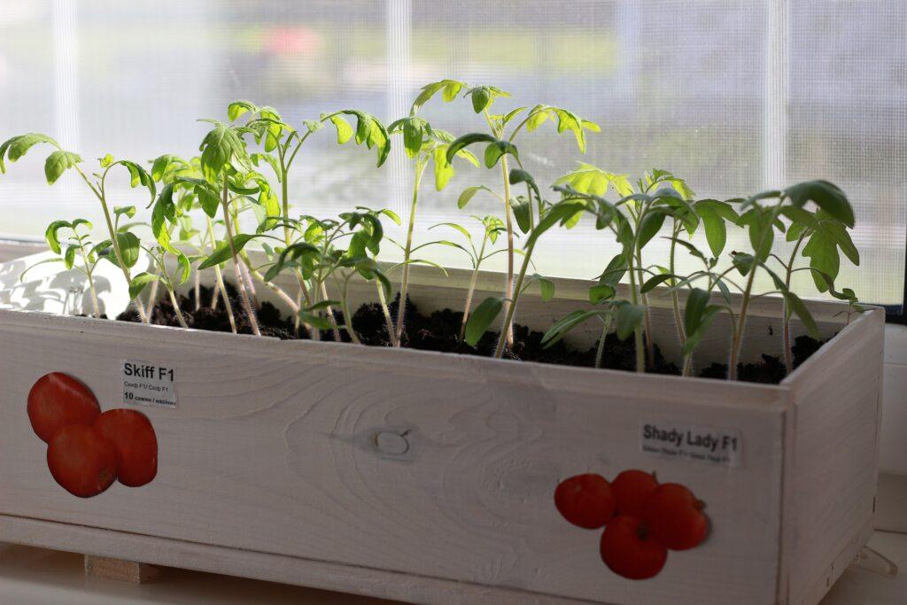Pollice verde: come fare l'orto di primavera in casa 1