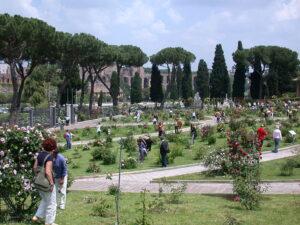 Passione rose: come coltivarle e dove trovare i più bei roseti nel Lazio 3