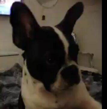 Rocco, il cane che parla
