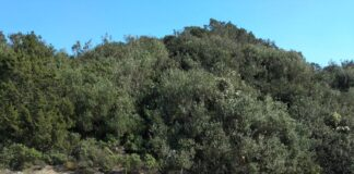 litoranea