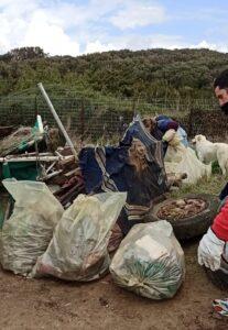 Lido dei Pini, i volontari puliscono la spiaggia di fronte al depuratore 1