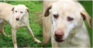 Cani randagi: il comune di Nettuno lancia un'iniziativa per la loro adozione 1