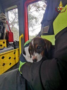 Cucciolo di cane cade per due metri: salvato dai vigili del fuoco a Cerveteri 1