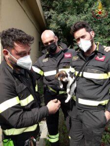Cucciolo di cane cade per due metri: salvato dai vigili del fuoco a Cerveteri 2