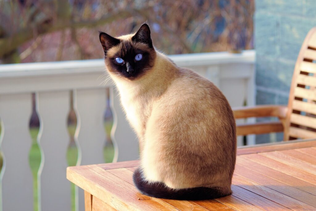 Come scegliere il gatto di casa: una questione di cuore o di cervello? 1