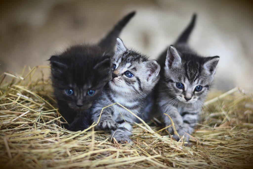 Come scegliere il gatto di casa: una questione di cuore o di cervello? 2