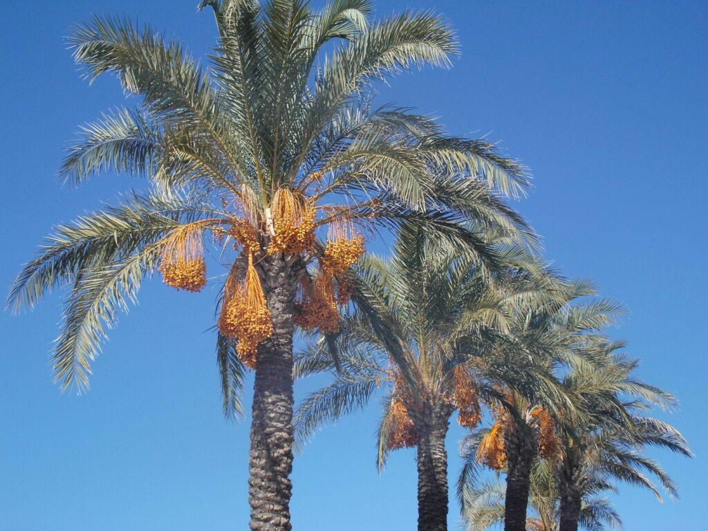 La Domenica delle Palme e i suoi simboli 1