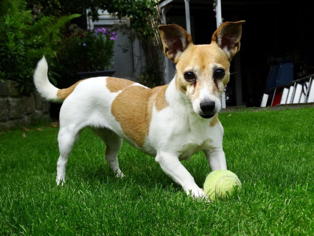 Il cane di casa più adatto: affidarsi alla genetica per scegliere 1