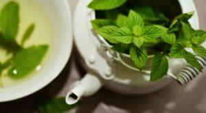 Erbe e piante officinali: usi in medicina naturale ed effetti tossici 2
