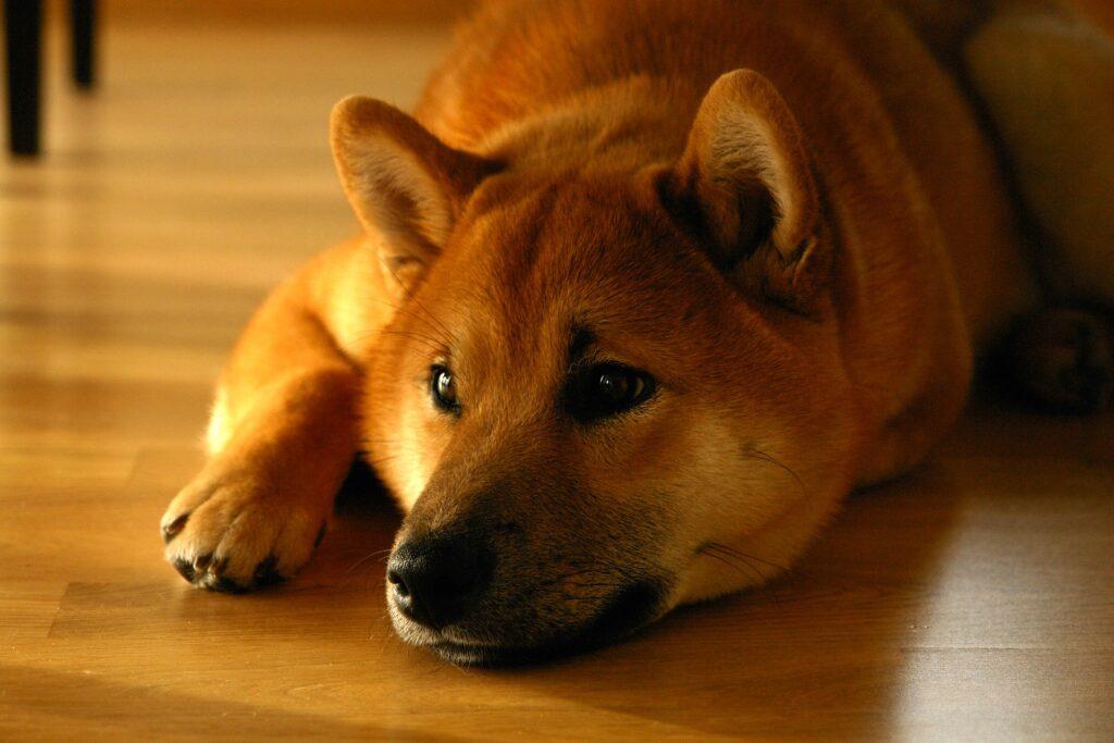 Il cane di casa più adatto: affidarsi alla genetica per scegliere 3