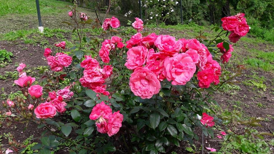 Orto Botanico di Roma in fiore: gli eventi tra aprile e maggio 3