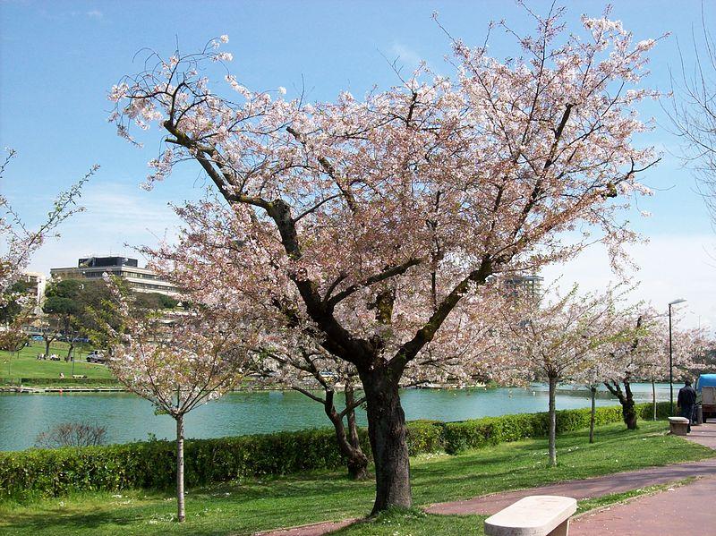E' primavera nei Giardini giapponesi di Roma 3