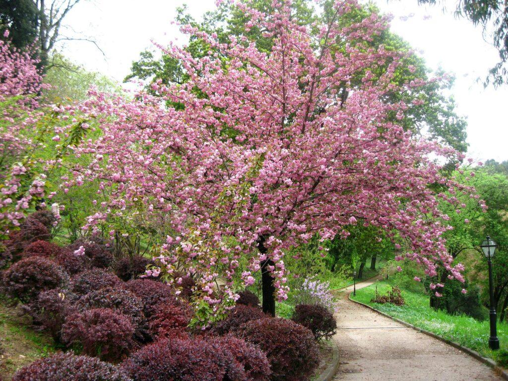 Orto Botanico di Roma in fiore: gli eventi tra aprile e maggio 1
