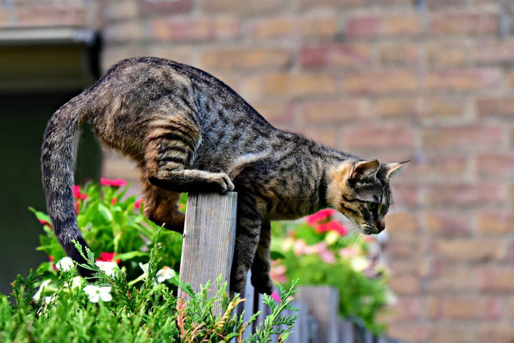 Attenti al gatto! Anche il micio fa la guardia alla casa 2