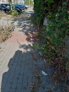 Litorale: slalom tra rifiuti, buche ed erbacce tra i marciapiedi dissestati (VIDEO) 5