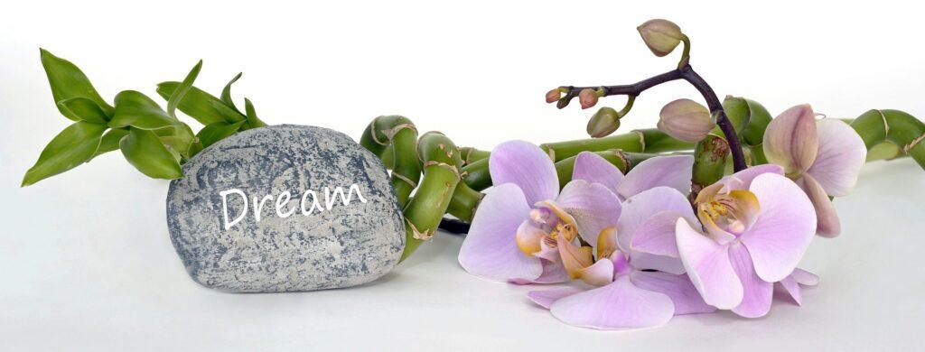 I migliori fiori contro lo stress sono le orchidee 2