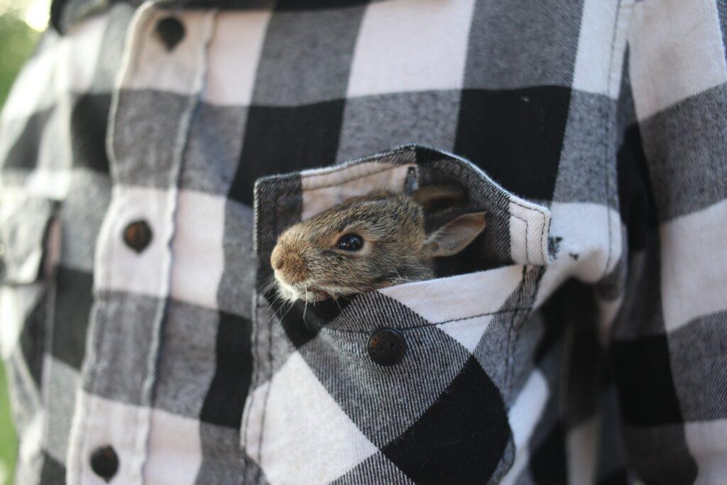 Il coniglio domestico: un vero amico silenzioso per il supporto emotivo dei malati 1