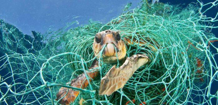 rifiuti marini tartaruga