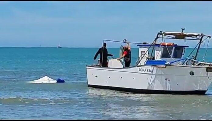 squalo a Fiumicino